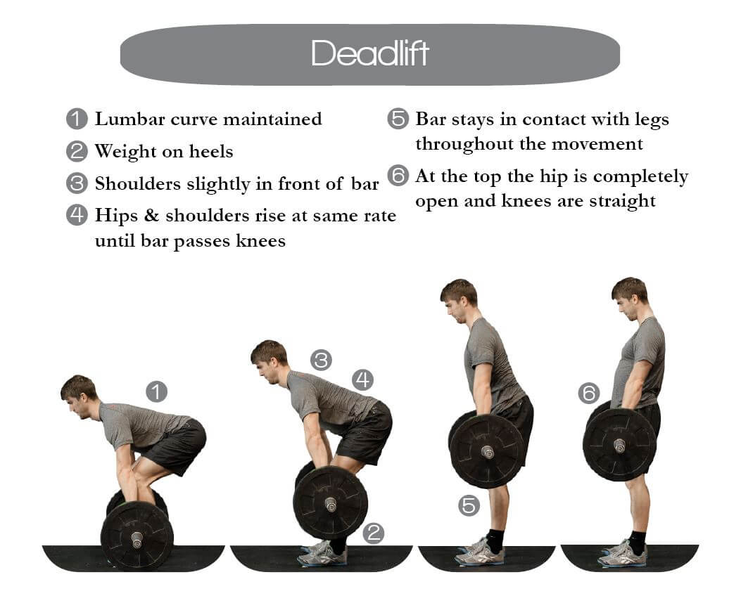 Learn Proper Deadlift Form To Build Strength Through Our Animated